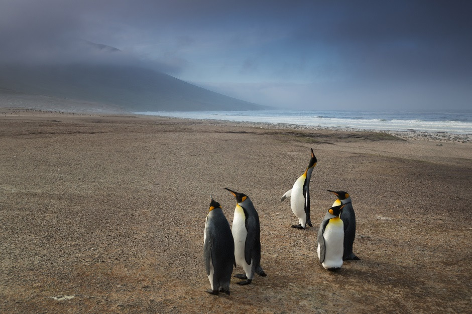 Group of penguins standing on a sandy beach looking around