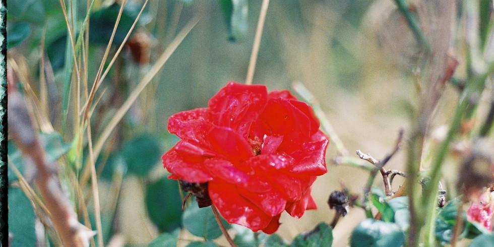 Rose Garden Backyard Show (Invite Only)