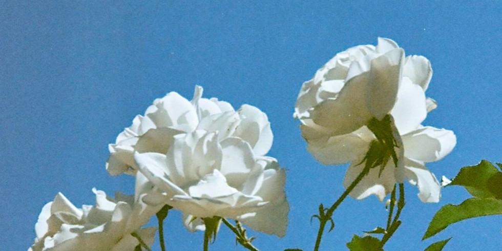 Rose Garden Backyard Show (SOLD OUT)