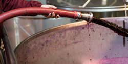 Remontado manual vinos de Toro