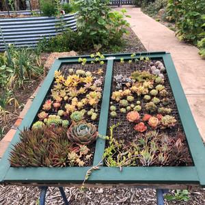 succulent bed.jpg