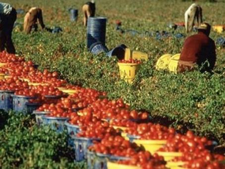 Contrasto al lavoro nero: blitz dei Carabinieri nelle aziende agricole del territorio
