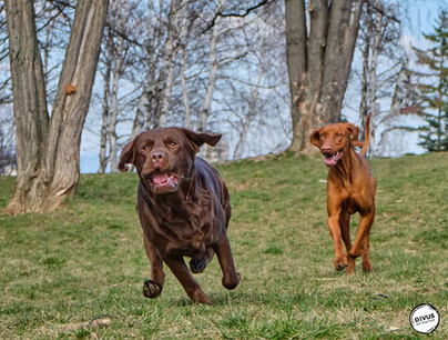 ТОП 5 Ползи от Суровото Хранене при Кучетата