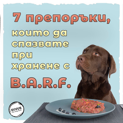 Топ 7 препоръки, които да спазвате при хранене на кучетата по метода BARF