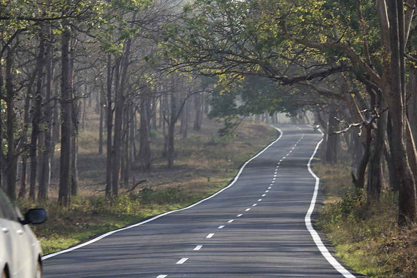 Mysore to Bandipur road.jpg