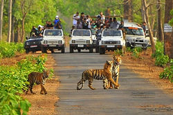 Sariska National Park.jpeg