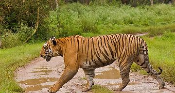 Madumalai Tiger Reserve.jpg