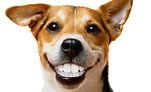 perro-sonriendo-y-ensenando-dientes.jpg
