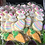 Thumbnail: Easter Cookie - Minis