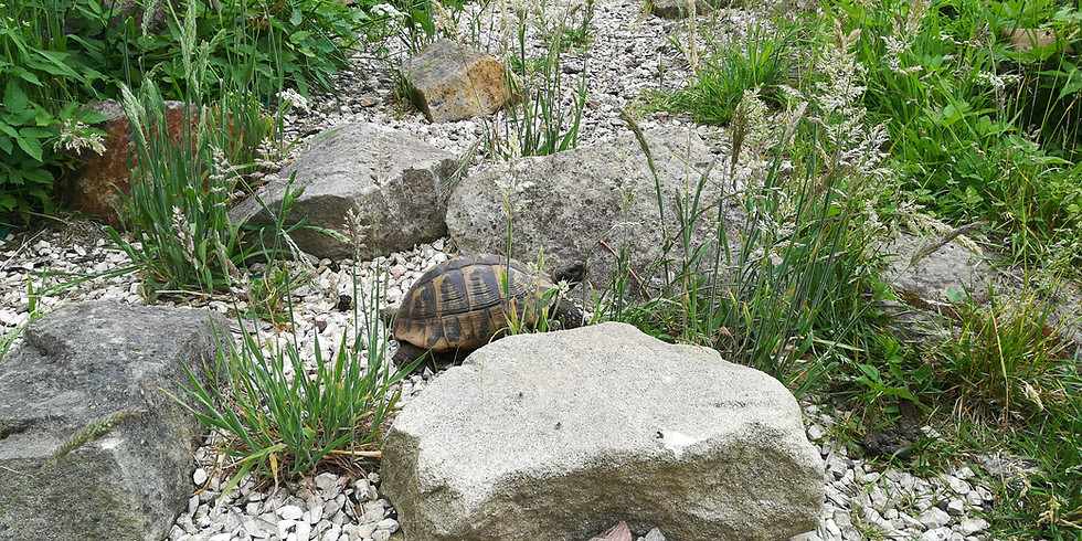 Schildkröten Webinar