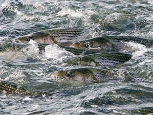 Fishing Report 8-25-19