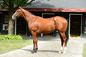 Discreet Cat, Ginger Bay, yearling, thoroughbred