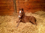 The Factor - Return The Jewel 2016 colt