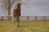 Majestic Warrior, Maid Service, foal, thoroughbred