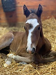 Foal, Ocean Rags, Arrogate, Juddmonte, stallion, thoroughbred