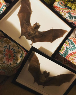 In bed with bats this morning! #theraven