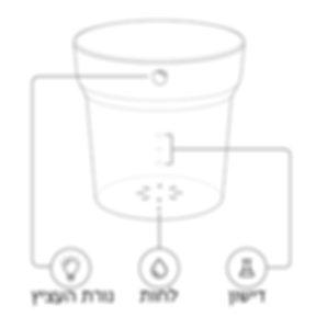 מבנה העציץ