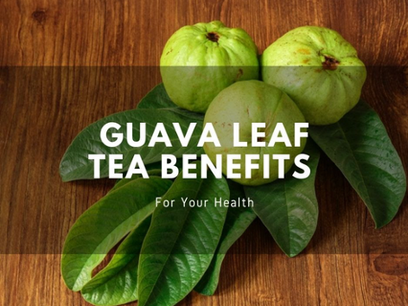 Guava Leaf Tea Benefits For Your Health - Guest post from Herbal Goodness Co.