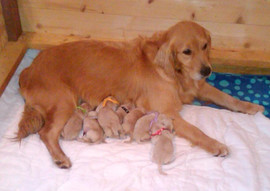 Breezie and pups.jpg