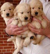 Handful of Pups