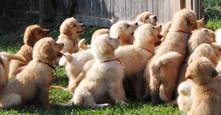 June 2010-puppies 303.JPG