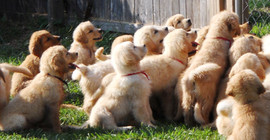 June 2010-puppies 303.JPG