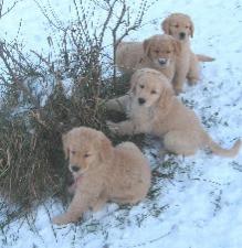 Snowy pups