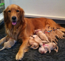 Cayanne & Pups