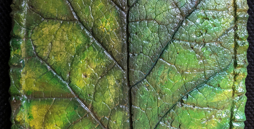 """Green leaf"" hypertufa"