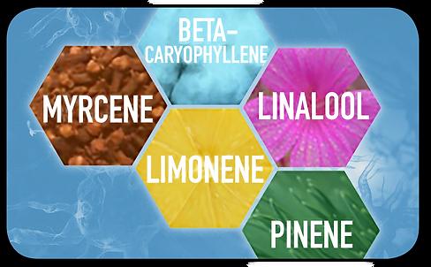 Napreva, Terpenes, caryophyllene, myrcene, limonene, linalool, pinene