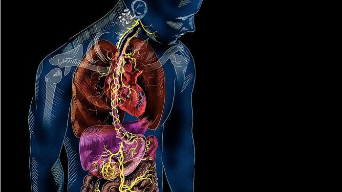 發現神經新迴路:你的腸子與大腦有直接的連結