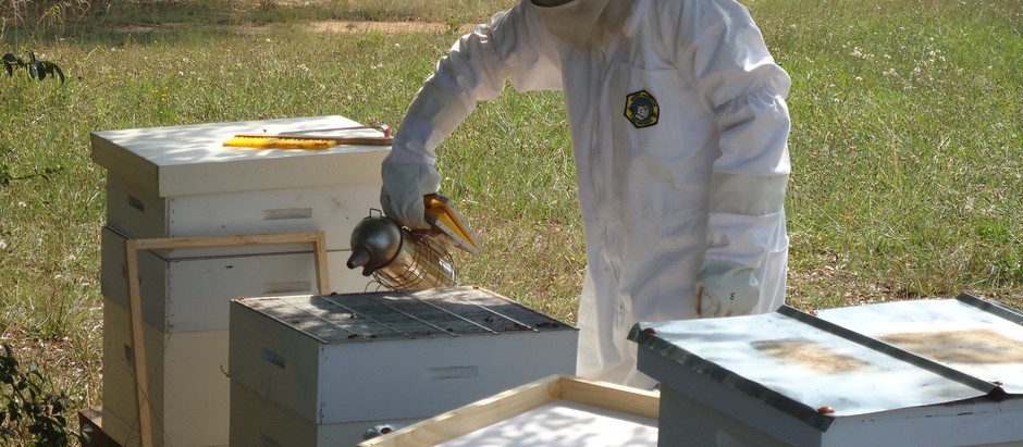 Randy Oliver's  Rules for Successful Beekeeping