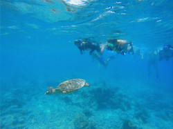 Snorkeling Excurions