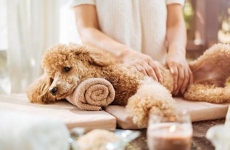 woman-giving-body-massage-to-dog-spa-sti