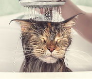 10-cat-grooming-tools-that-you-should-ha