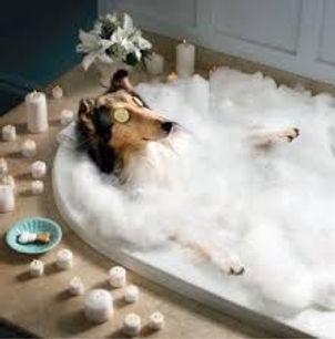 uptotwn-dog-in-bath-tub_orig.jpg