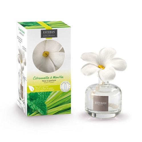 Esteban Flor Perfumada Lemongrass & Mint 75ml