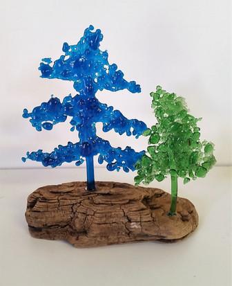 Blue Spruce & Evergreen