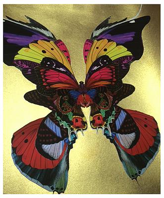Butterflies print, Urban and Street art by Kristjana S Williams at Deep West Gallery