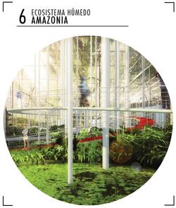 6-Ecosistema_húmedo_Amazonia
