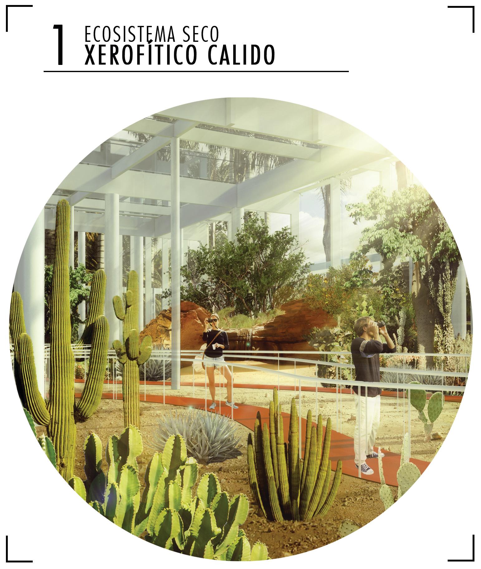 Ecosistema_seca_xerofítico_seco