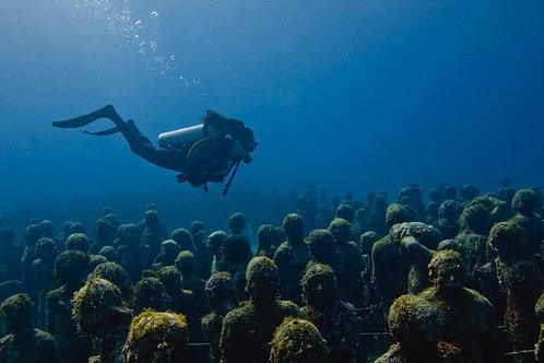 Musa Diving