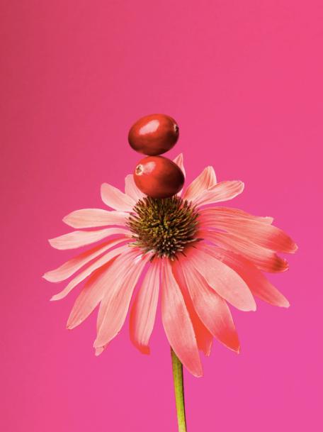 Herbal-Tea-Flavours-Kim-Morphew-Food-Sty