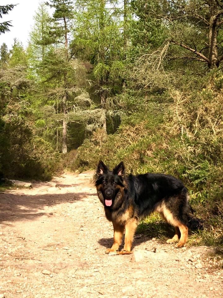 Timber (Maximus)