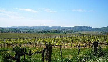 Vinmarker Sydafrika.jpg