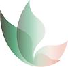 Shalom Photography Logo Butterfly