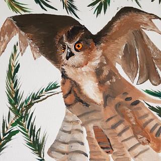 'Owl' by Robert Cook