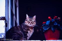 Snooty Cat