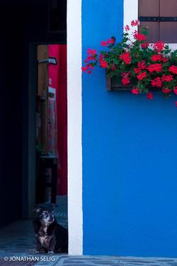 Dog & Blue Wall Geraniums #47