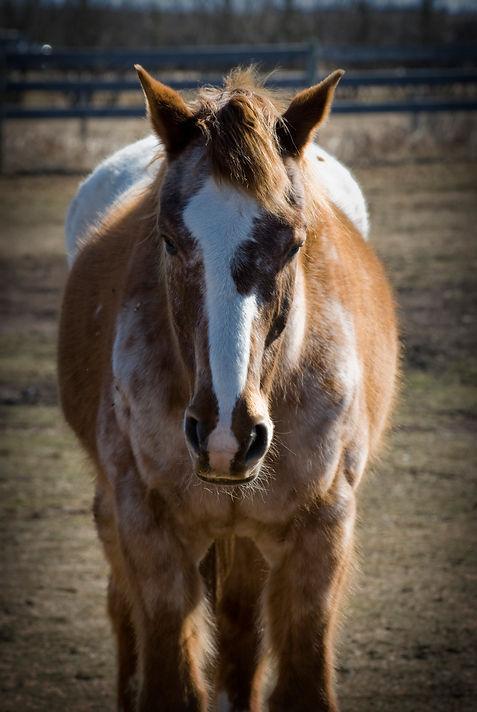 horsewy.jpg